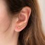 Boucles d'oreilles laurier en plaqué or